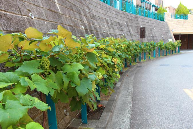 夏の庭・・・・・実りの秋を前に ♪  ♪_e0295348_22261666.jpg
