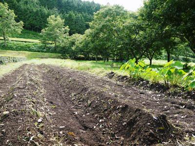 利平栗 栗の王様!今年も、自然栽培で順調に育っています!_a0254656_17564958.jpg