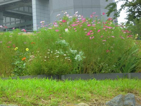 猛暑日の旧中川_c0249569_16445610.jpg