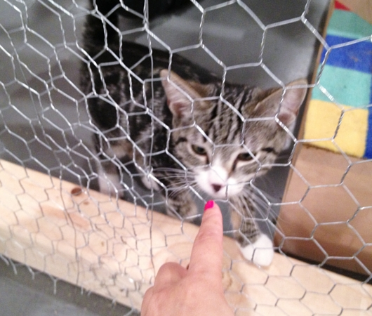 猫好きにオススメのアート展示会「The Cat Show」がチェルシーのギャラリーで開催中_b0007805_12203462.jpg