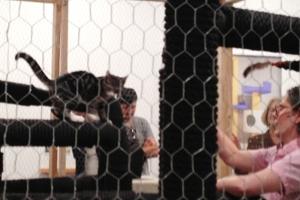 猫好きにオススメのアート展示会「The Cat Show」がチェルシーのギャラリーで開催中_b0007805_1221819.jpg
