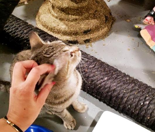 猫好きにオススメのアート展示会「The Cat Show」がチェルシーのギャラリーで開催中_b0007805_1222408.jpg