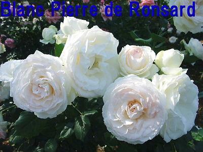 b0165139_20595767.jpg