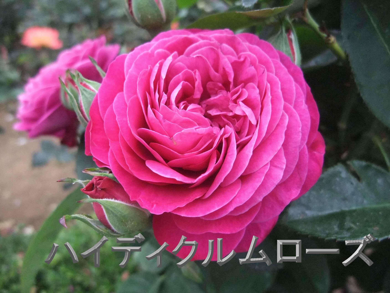 b0165139_22331590.jpg
