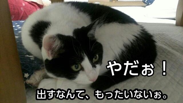 c0181639_22475360.jpg