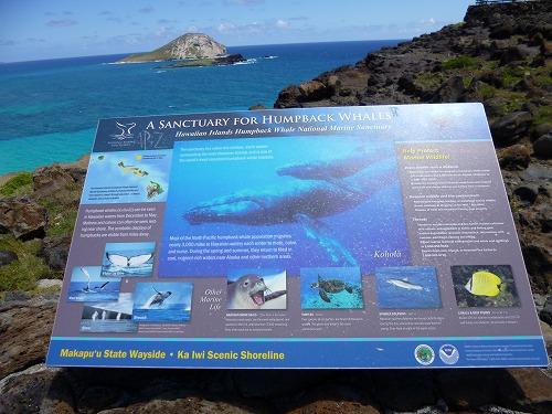 ハワイ☆2013~マカプウからワイマナロビーチへ、そしてカイルアでプレートランチ♪_f0207146_9262218.jpg