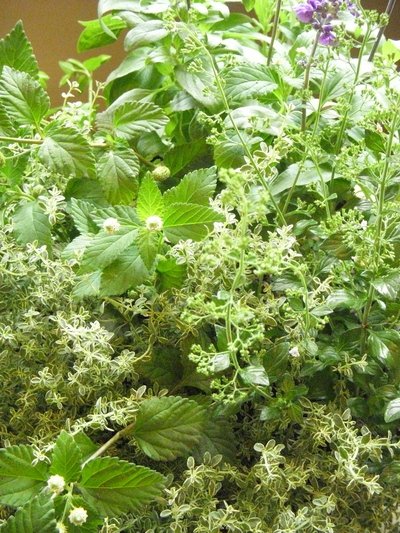Herbs。。。_a0229658_8362121.jpg