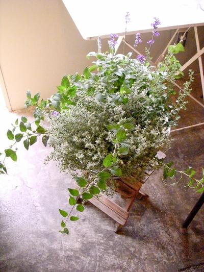 Herbs。。。_a0229658_8445850.jpg