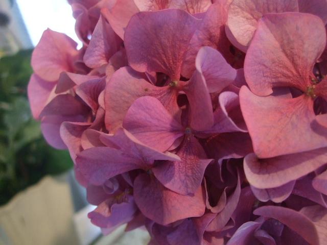 オークリーフ花の教室(田原さんの作品)_f0049672_1625090.jpg
