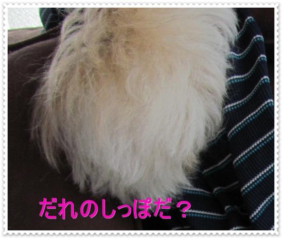 b0124693_7145695.jpg