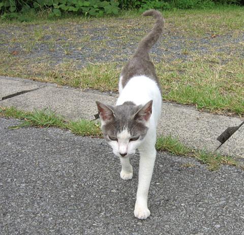 東金ダムの野良猫_b0114798_17432577.jpg
