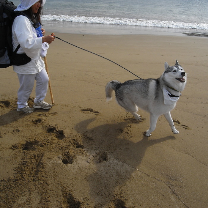 Memory of the second pilgrimage with husky HANA_c0049299_16253353.jpg