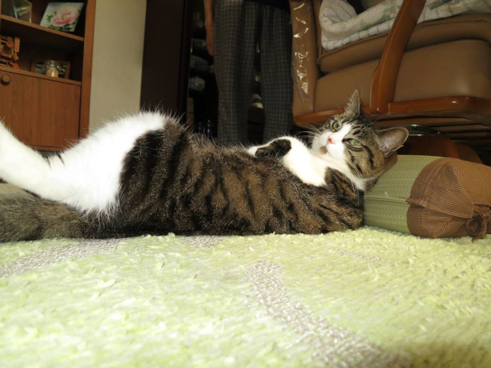 【猫】気持ちよく寝れるニャ_f0141609_1173341.jpg
