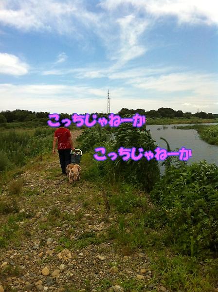 入間川で、涼をとる。_b0067012_14184657.jpg