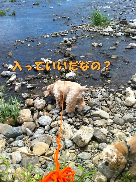 入間川で、涼をとる。_b0067012_14295099.jpg