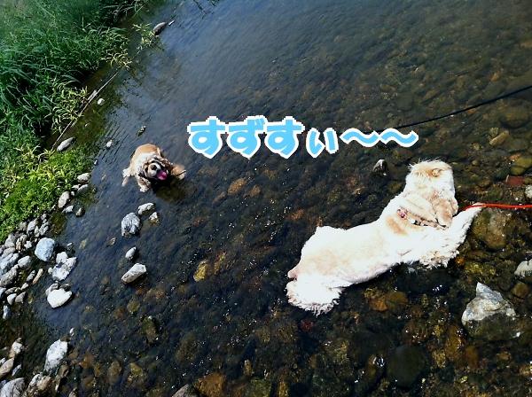 入間川で、涼をとる。_b0067012_14351938.jpg