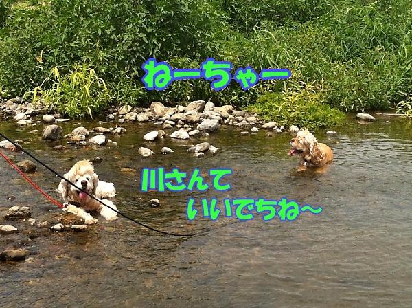 入間川で、涼をとる。_b0067012_14355254.jpg