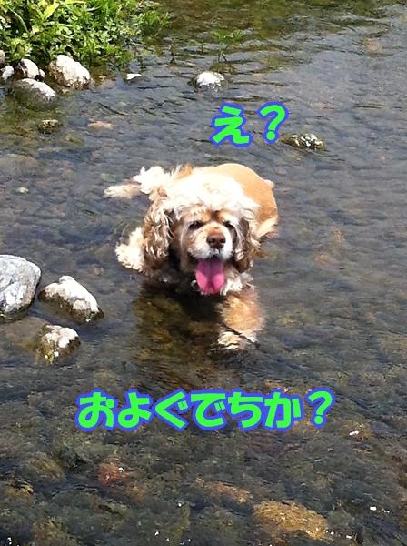 入間川で、涼をとる。_b0067012_1438182.jpg