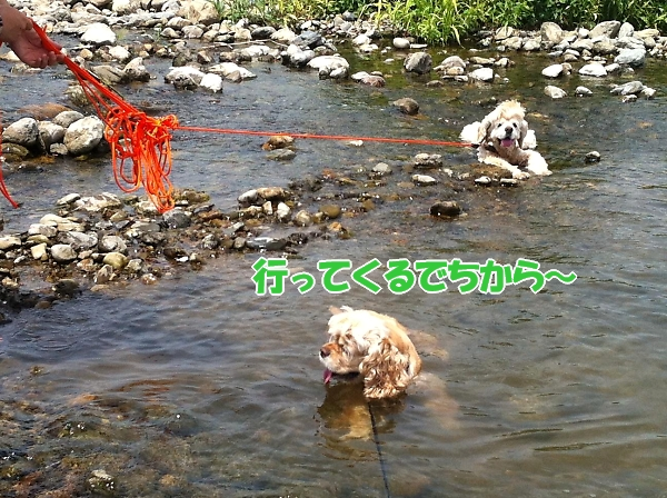 入間川で、涼をとる。_b0067012_14385592.jpg