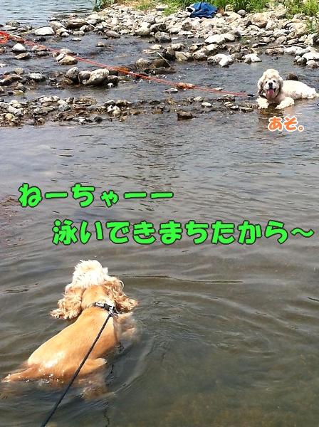 入間川で、涼をとる。_b0067012_14402264.jpg