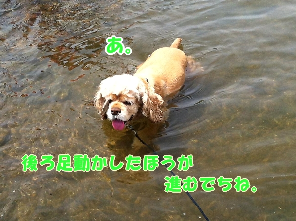 入間川で、涼をとる。_b0067012_14404614.jpg