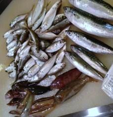 魚釣り_c0210829_192479.jpg