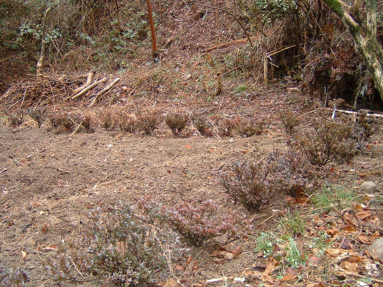 植樹状況写真撮影_c0239329_0353479.jpg