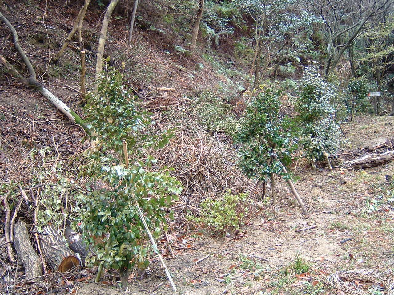植樹状況写真撮影_c0239329_0354257.jpg