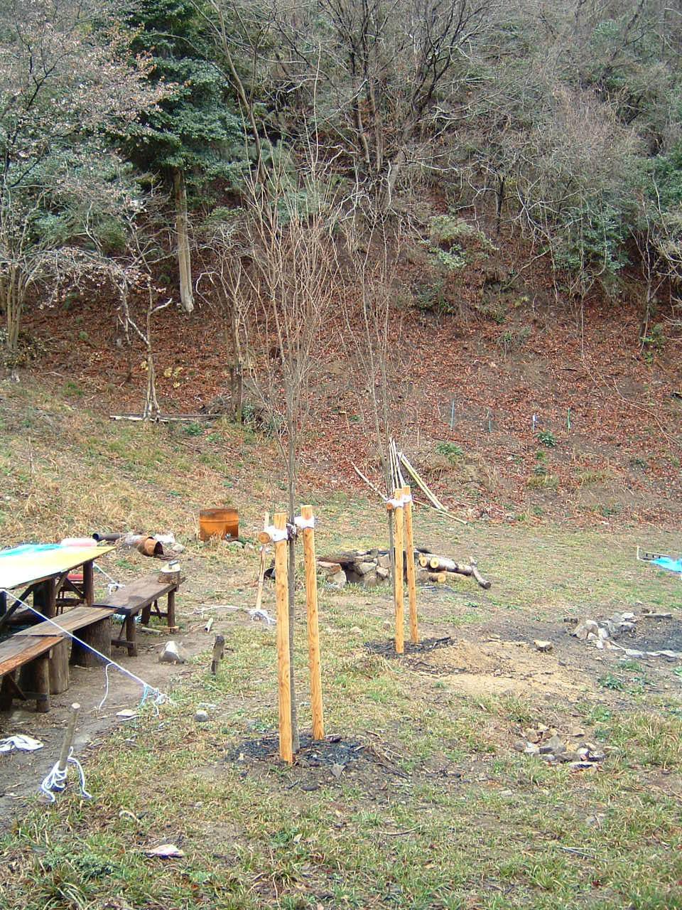 植樹状況写真撮影_c0239329_036079.jpg