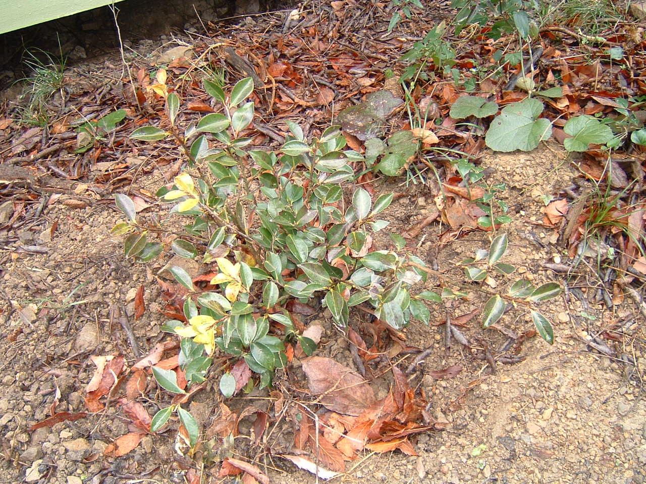 植樹状況写真撮影_c0239329_0364196.jpg