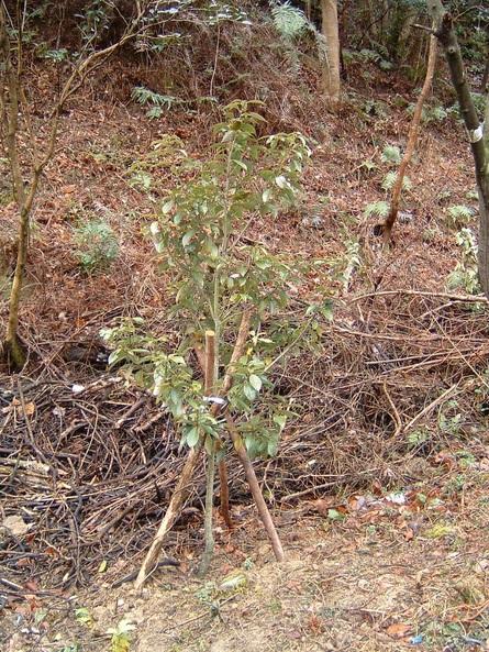 植樹状況写真撮影_c0239329_0532739.jpg