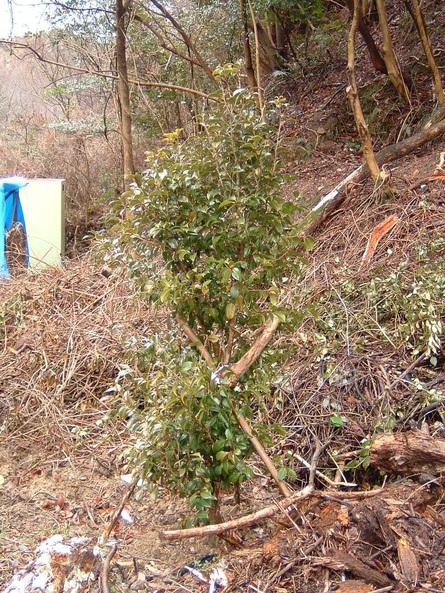 植樹状況写真撮影_c0239329_0533942.jpg