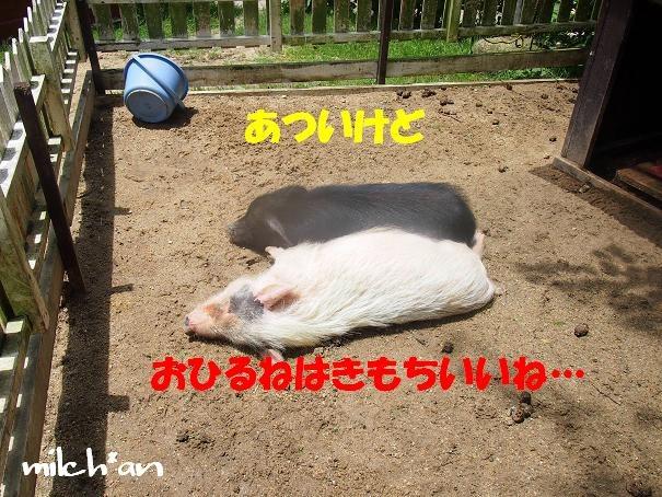b0115642_2246128.jpg