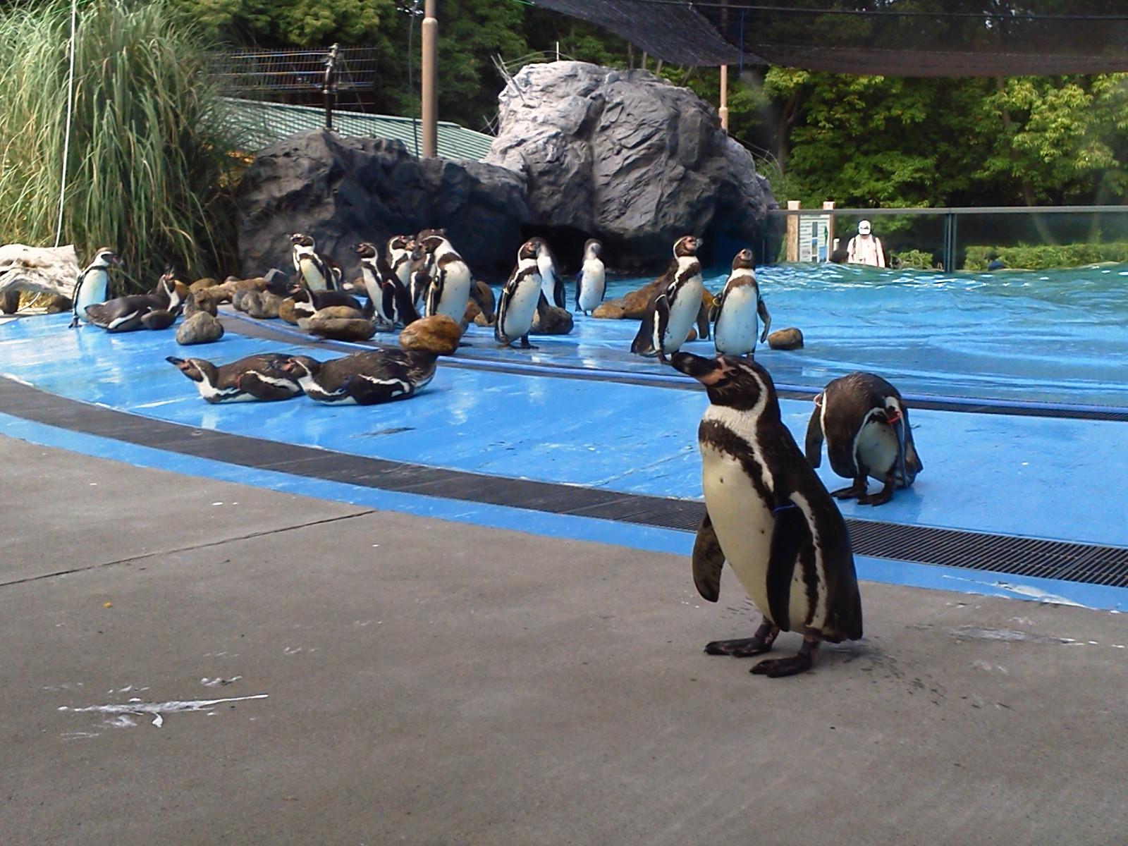 ペンギンヒルズでお散歩♪_b0024758_22323350.jpg