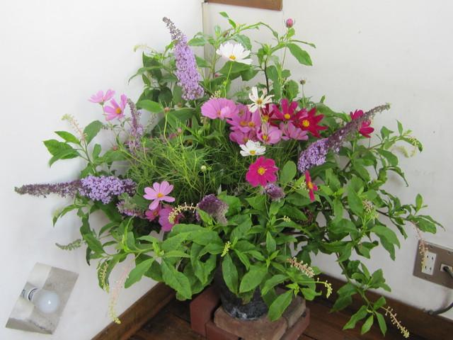 こんなに暑かったら、花が、もたんのよ_d0177560_21272216.jpg