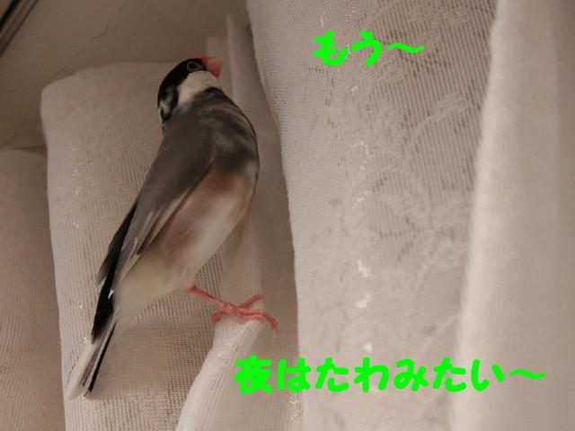 b0158061_21255735.jpg