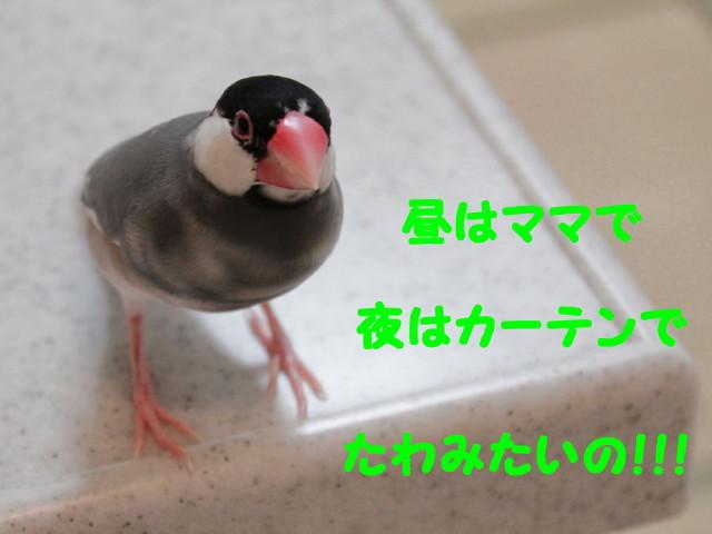 b0158061_21263295.jpg
