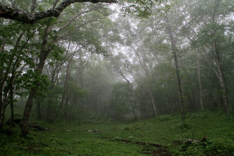 濃霧の道東_f0117296_8341392.jpg