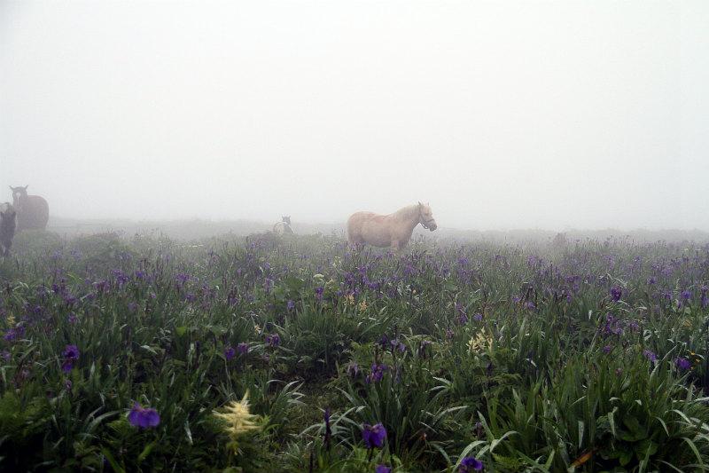 濃霧の道東_f0117296_8345959.jpg