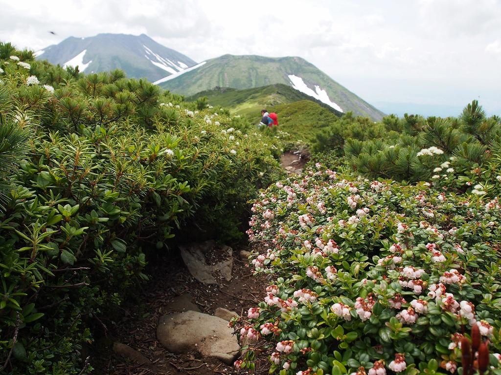 7月12日、オプタテシケ山から望岳台_f0138096_15502234.jpg