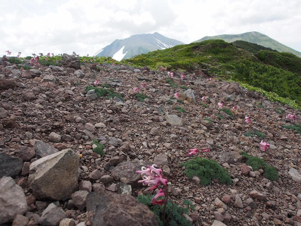 7月12日、オプタテシケ山から望岳台_f0138096_15503240.jpg