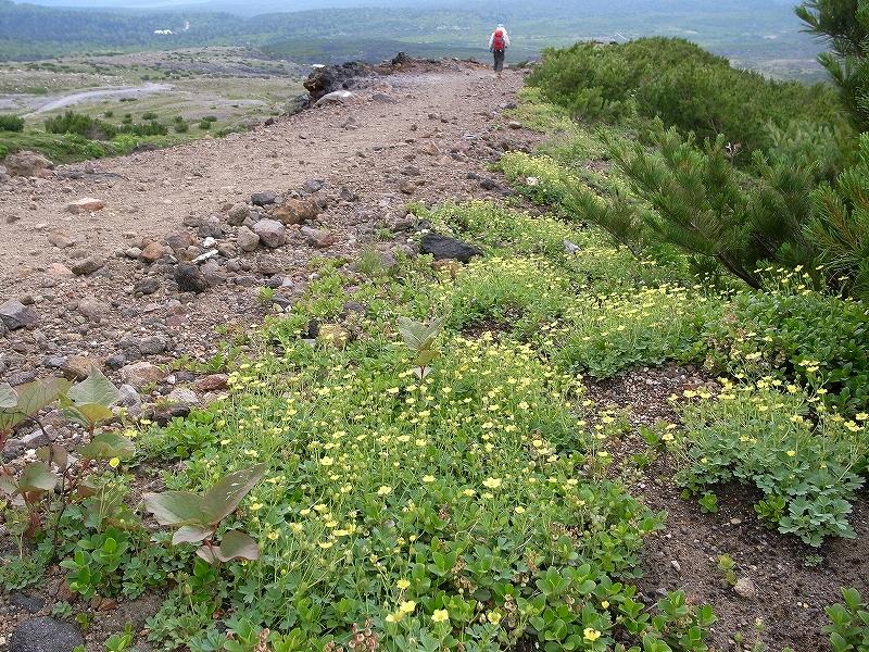 7月12日、オプタテシケ山から望岳台_f0138096_15521864.jpg