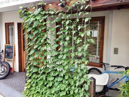 緑のカーテン完成!_f0213410_9202082.jpg