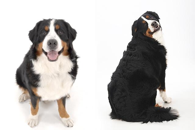 犬 の 種類 一覧