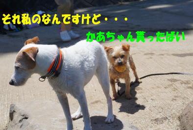 d0013645_17393855.jpg