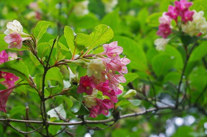 湯ノ丸山は花盛り_e0292469_1724557.jpg