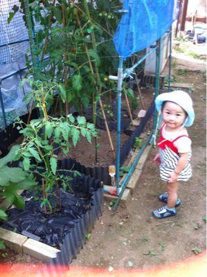 無農薬野菜(o^^o)_a0210776_10593551.jpg