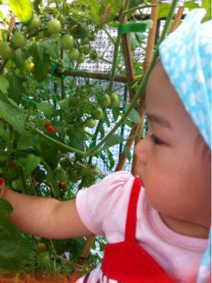 無農薬野菜(o^^o)_a0210776_1059361.jpg