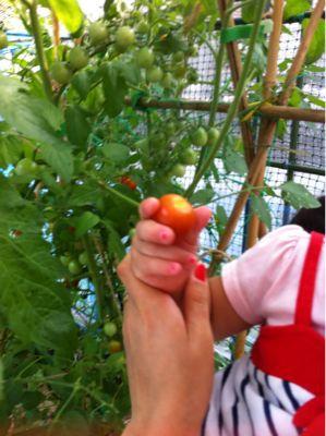 無農薬野菜(o^^o)_a0210776_10593891.jpg