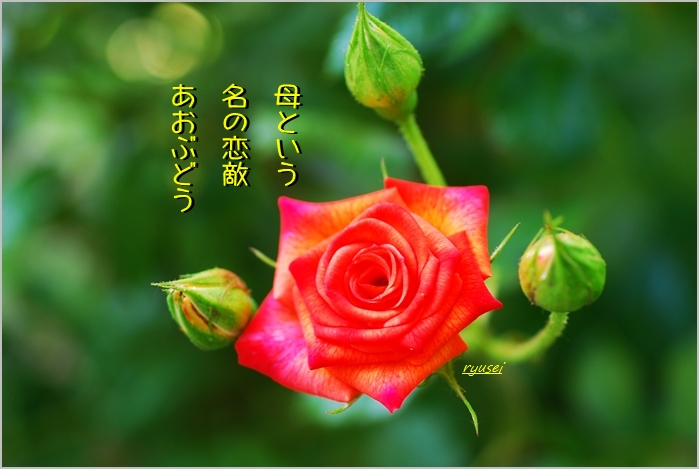 f0053297_13381193.jpg